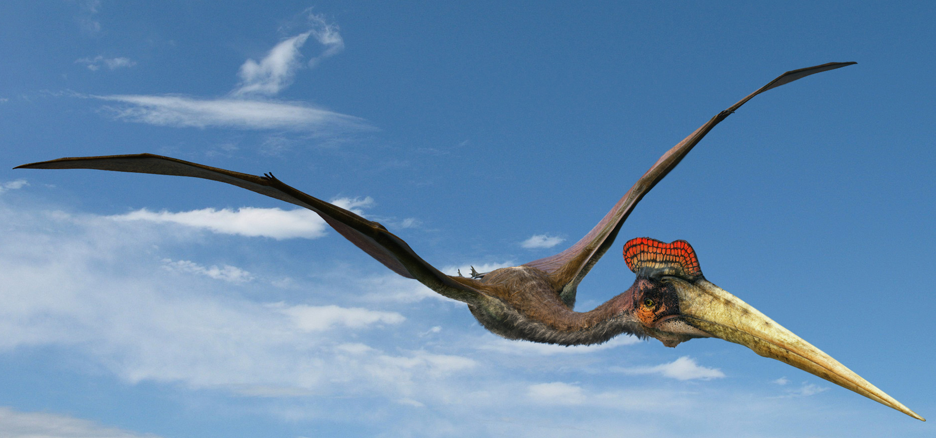 Flying Monsters Film Opens Sunday, July 1 at the American Museum of Natural History