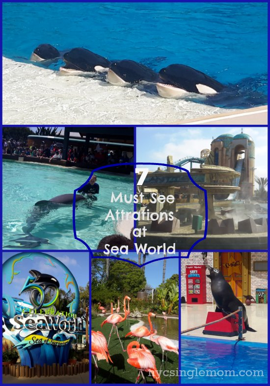 7 must see attractions at sea world san diego seaworld for Must see nyc attractions