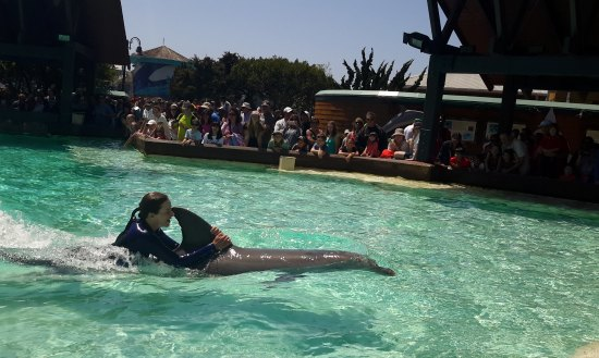 "meet dolphin singles Meet the fleet links & local info  (the star of the television show ""flipper"" was an atlantic bottlenose dolphin) these animals are so common in the ."