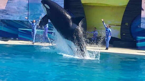 7 Must See Attractions at Sea World San Diego @SeaWorld