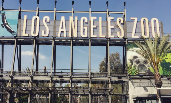Getting a Glimpse of the #MonkeyKingdom While Visiting the Los Angeles Zoo @LAZoo