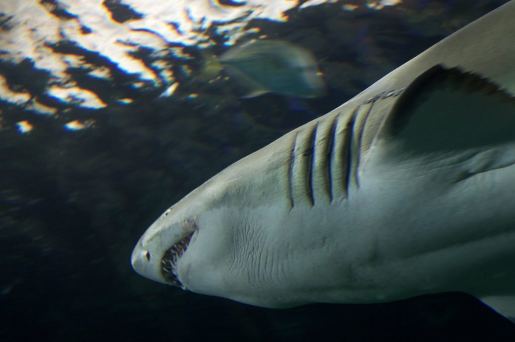 Aquarium Sharks Related Keywords & Suggestions - Toronto Aquarium ...