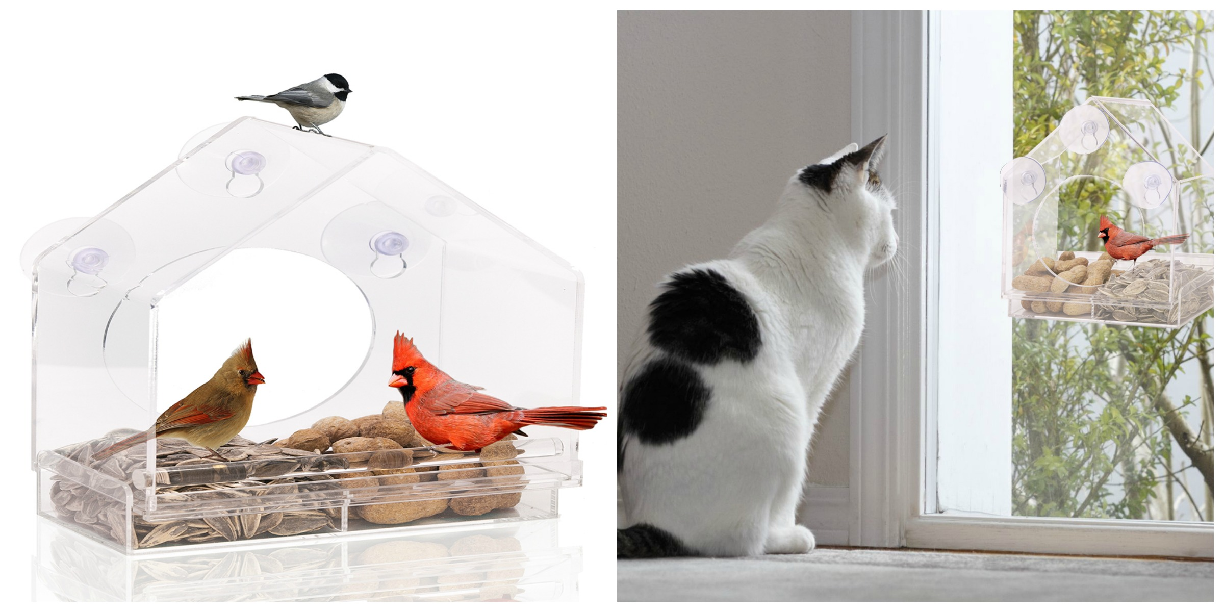 GIVEAWAY: Nature Anywhere's Window Bird Feeder Is Perfect Gift for Any Age