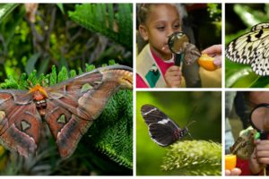Live Butterflies Return to the American Natural History Museum@amnh