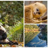 BORN IN CHINA – Adorable New Clips Now Available #BornInChina #EarthDay