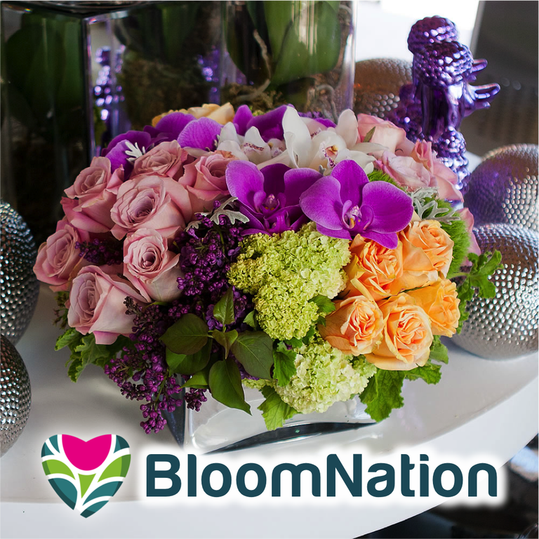 Bloomnation coupon code