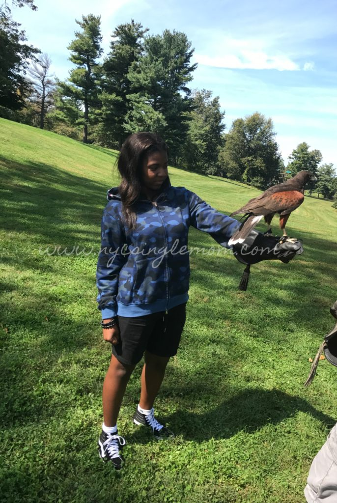 """Falconry Experience Hotel Hershey"" Things to do in Hershey"